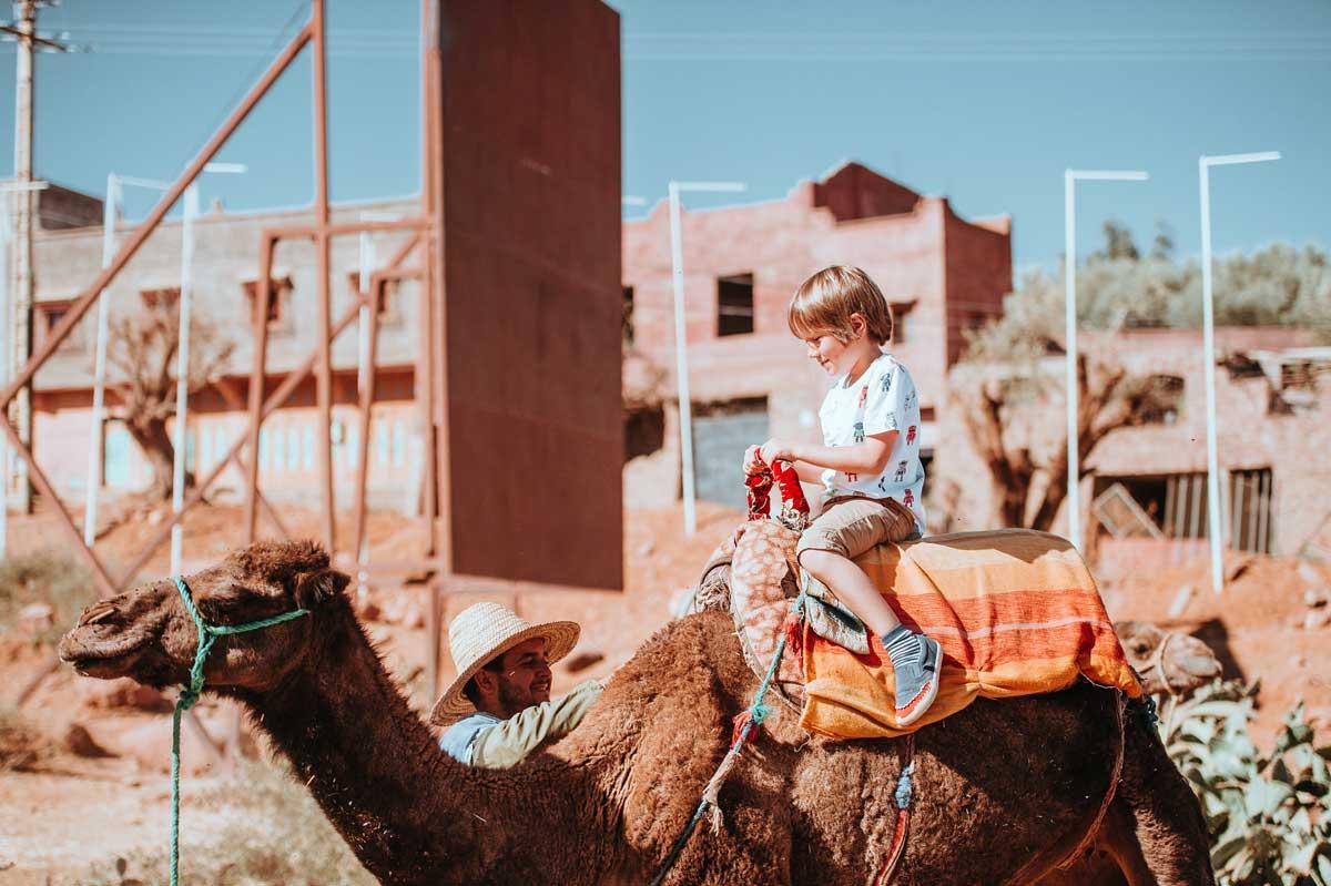 U Kini postavljeni prvi semafori za kamile